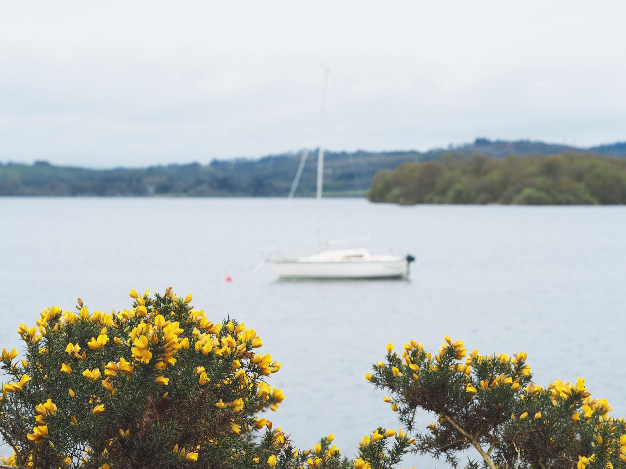Tippy.fr - Road trip en Écosse #2 : Loch Lomond