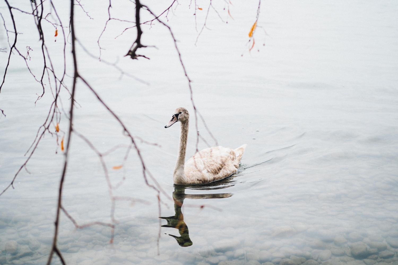 Lac Léman / Tippy.fr