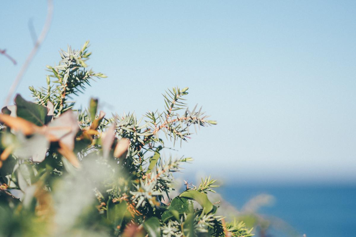 Roadtrip en Corse, plage de Ghjunchetu / Tippy.fr