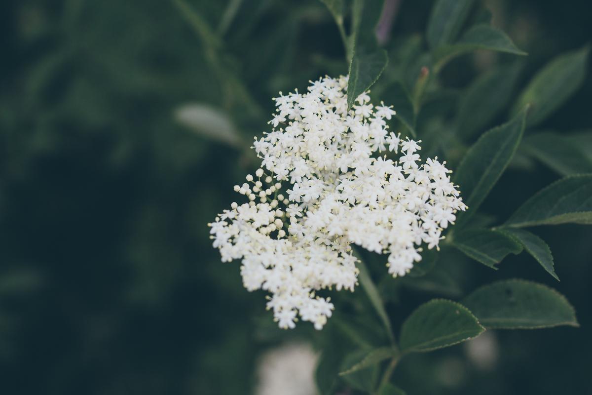Week-end en Savoie - L'herbier de la Clappe / Tippy.fr.