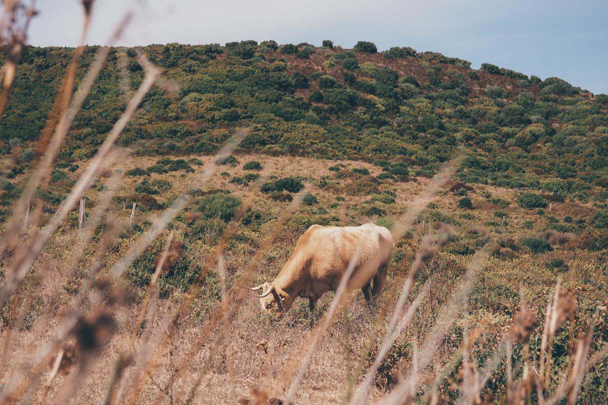 Road trip en Corse, le Cap Corse / Tippy.fr