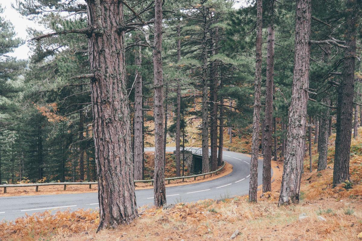 Road trip en Corse, forêt de Zonza / Tippy.fr
