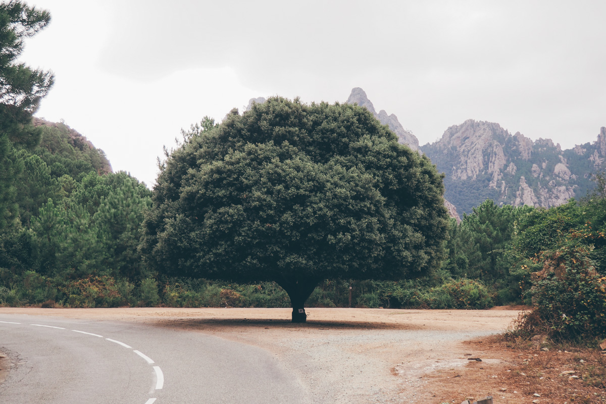 Road trip en Corse, Bavella / Tippy.fr