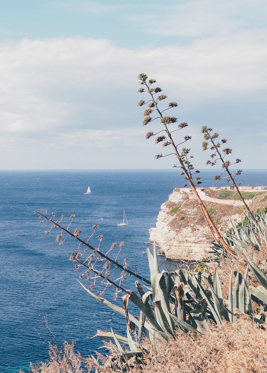 Road trip en Corse, Bonifacio / Tippy.fr