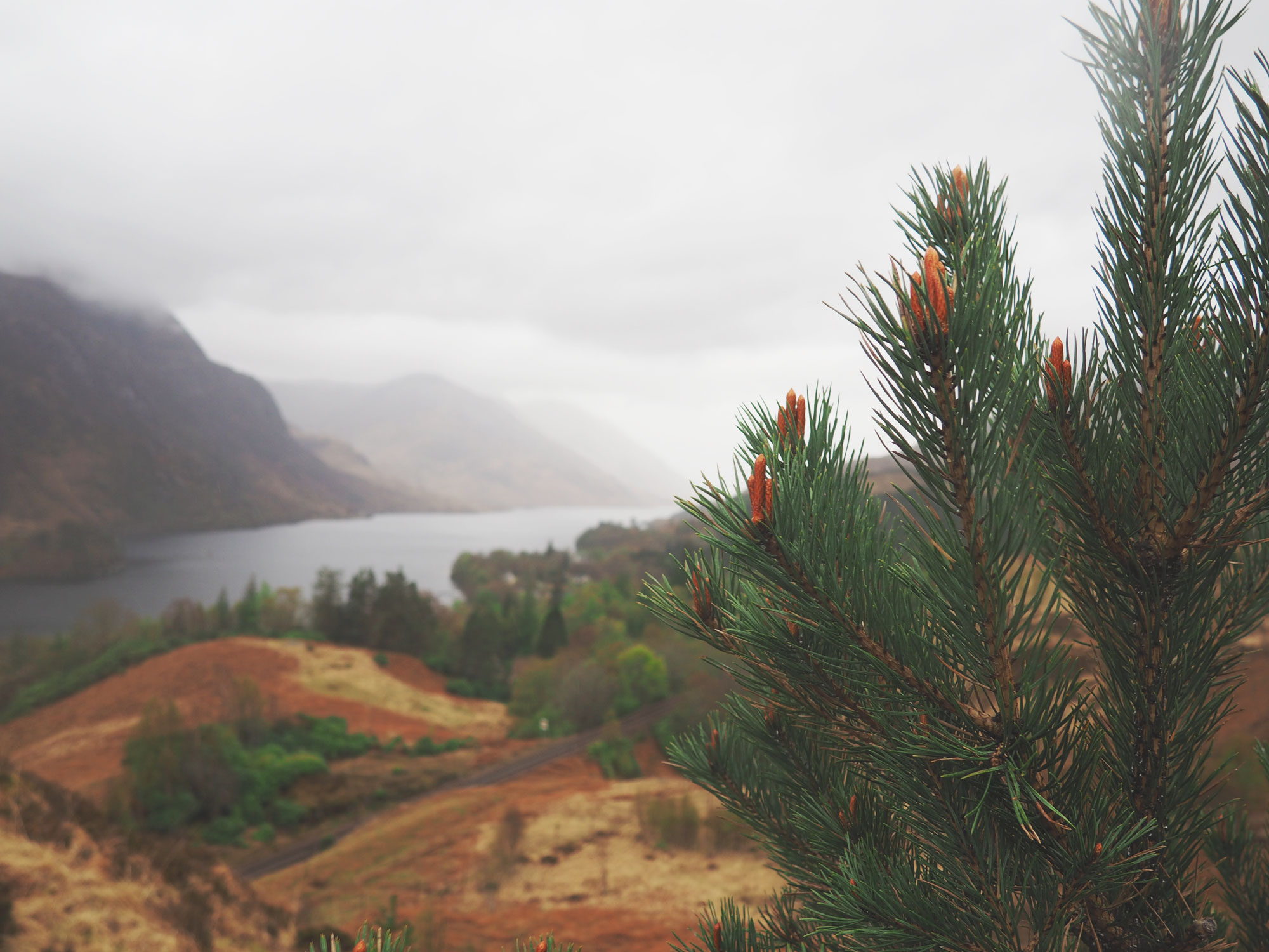 Tippy.fr - Road trip en Écosse #3 : Glenfinnan