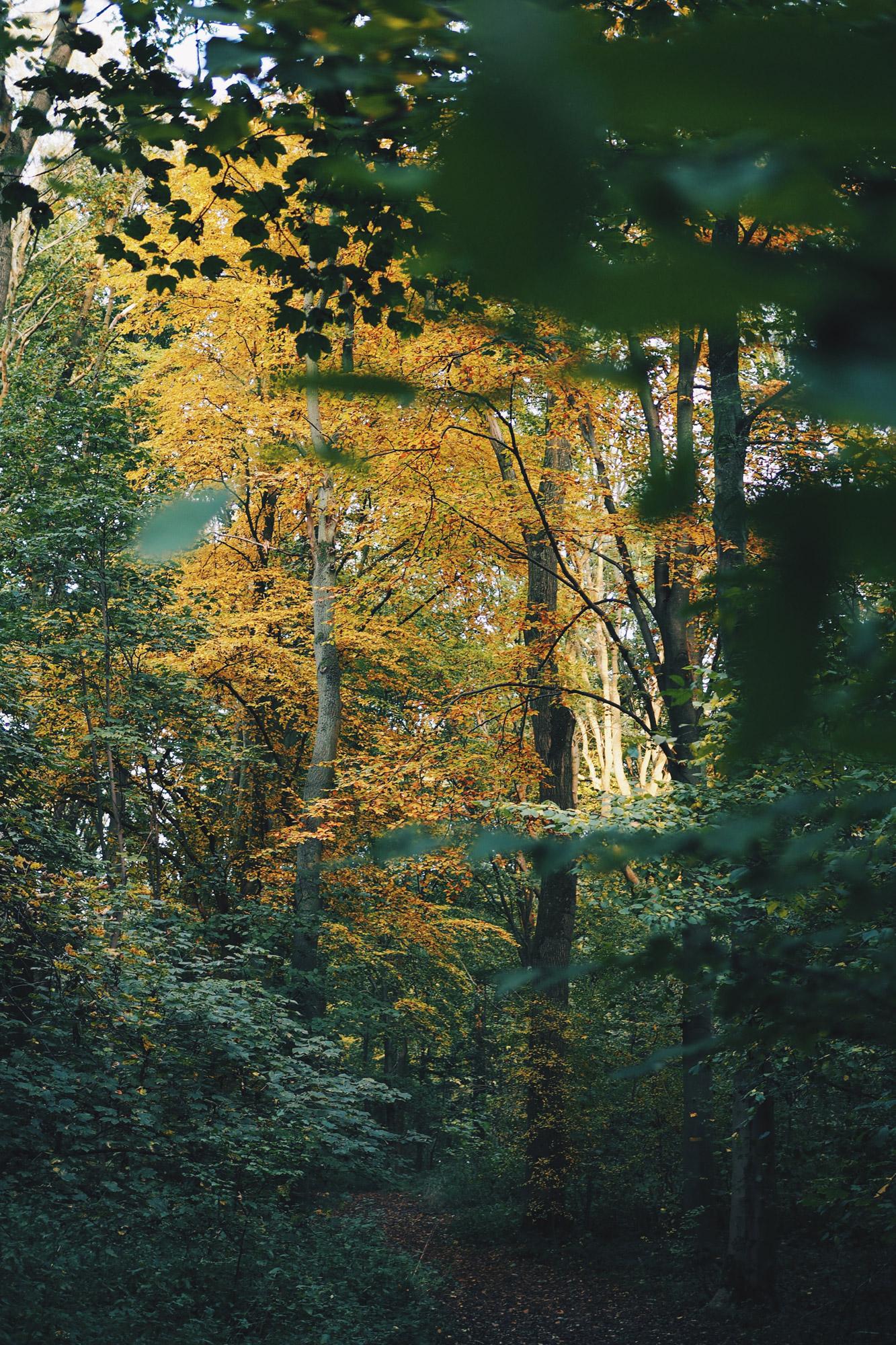 Bois de Barœuil, Tippy.fr