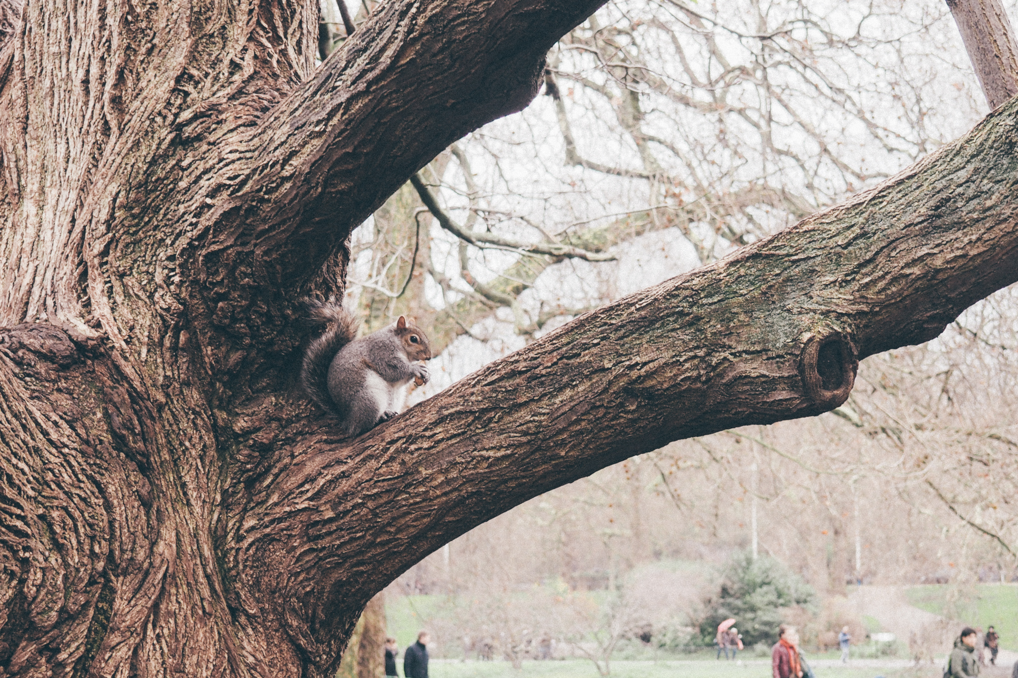 Hyde Park, London / Tippy.fr