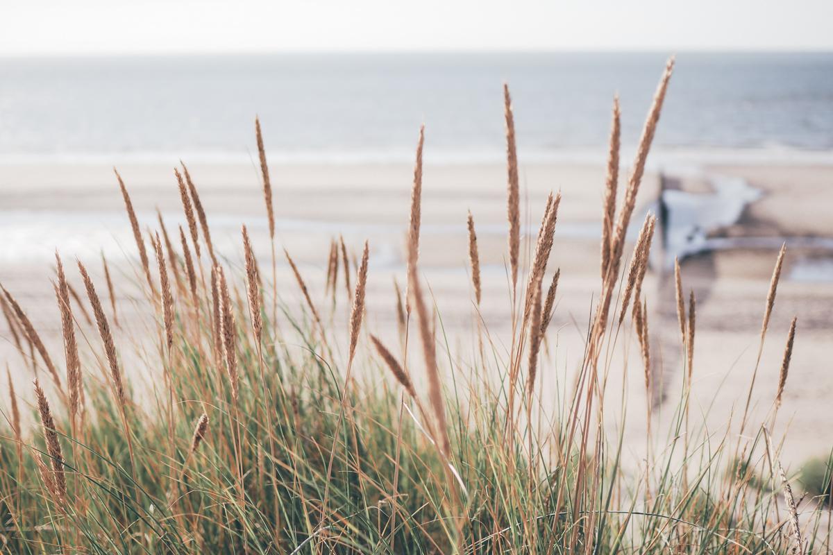 Un beau dimanche - Zeeland / Tippy.fr