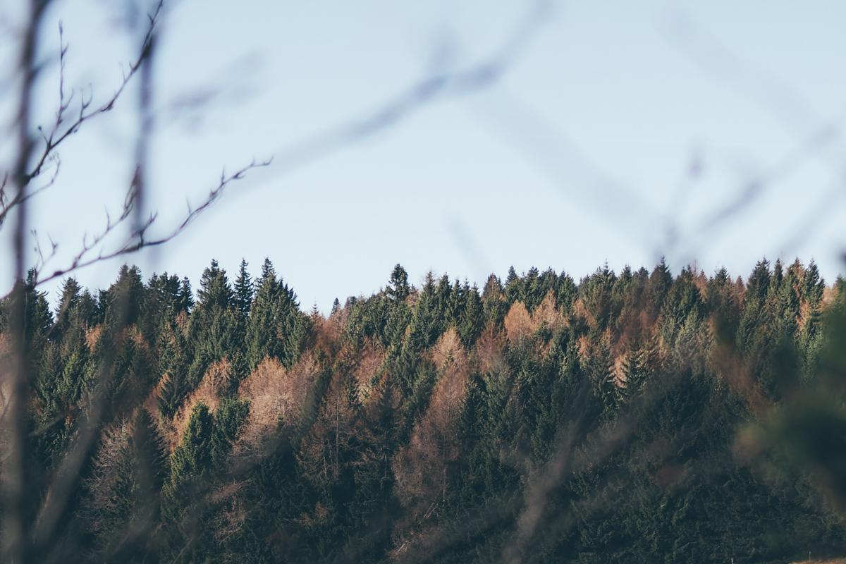 Alsace, une randonnée en Décembre à Boenlesgrab / Tippy.fr