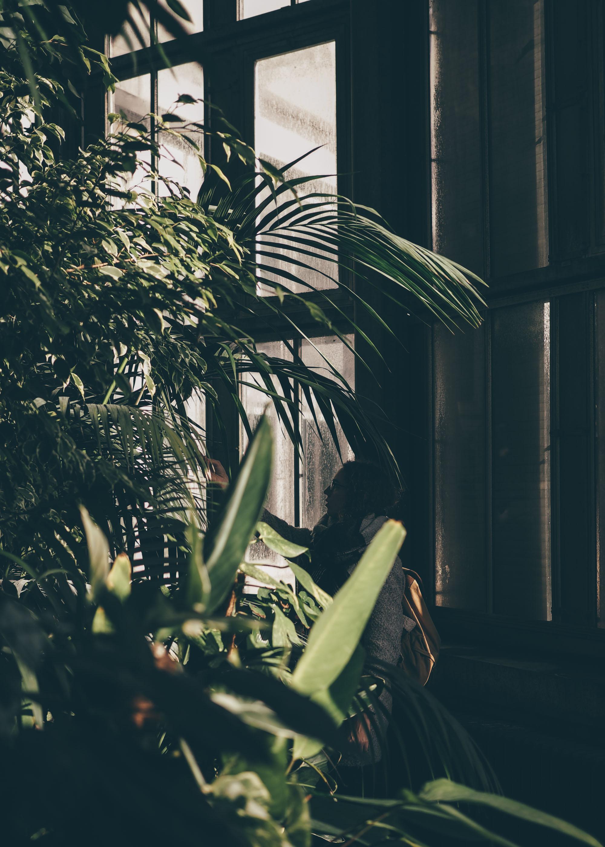 Anvers City Guide : pause au vert dans les serres du jardin botanique / Tippy.fr